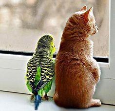 Εφτά περίεργες φιλίες!!!