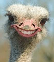 Γιατί τα πτηνά δεν έχουν δόντια??