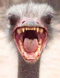 πουλί-δοντια