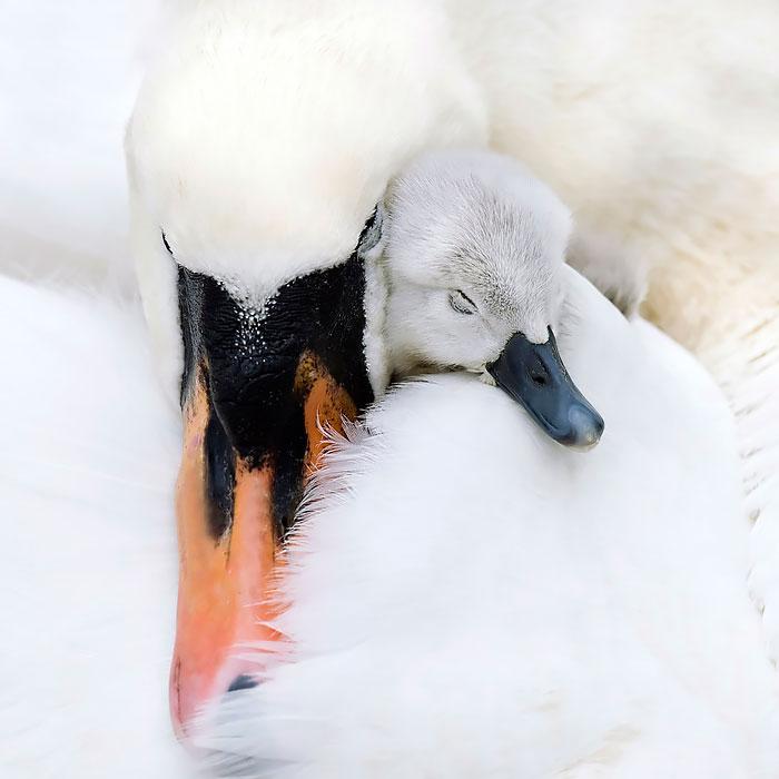 Γαλλία: Εξόντωση πουλιών για την αντιμετώπιση της επιδημίας Η5Ν8.