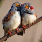 Πουλιά και συζυγικά καβγαδάκια!!