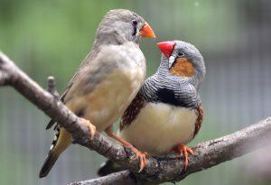 Γκέι αρσενικό πουλί
