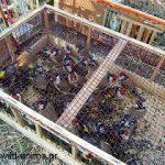 Προσοχη απο που θα πάρετε πουλια… Τα λαμογια πολλά…