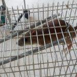 Από τι κινδυνευουν τα πουλιά μας!!!
