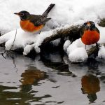 Πουλιά και πρόβλεψη καιρού!!!