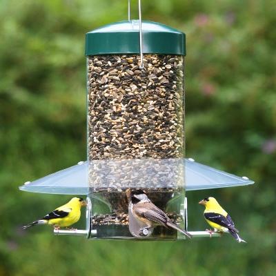 Τάισμα άγριων (ελεύθερων) πουλιών.