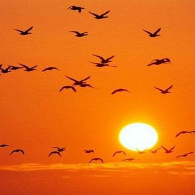 Πουλιά και ΟΝΕΙΡΟΚΡΙΤΗΣ!!
