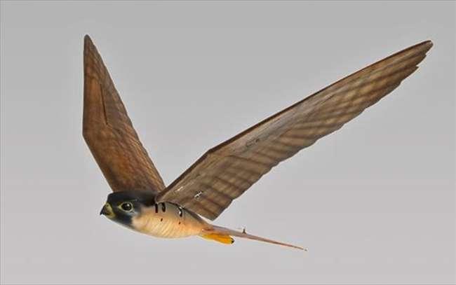 Robirds. Ρομποτικά αρπακτικά πτηνά!!