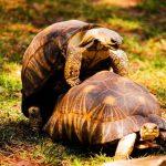 Πόσο καλά ξέρουμε τις … Χελώνες?