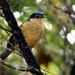 Δηλητηριώδη πουλιά…