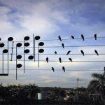 Τα πουλιά συνθέτουν μουσική με τον τρόπο τους!