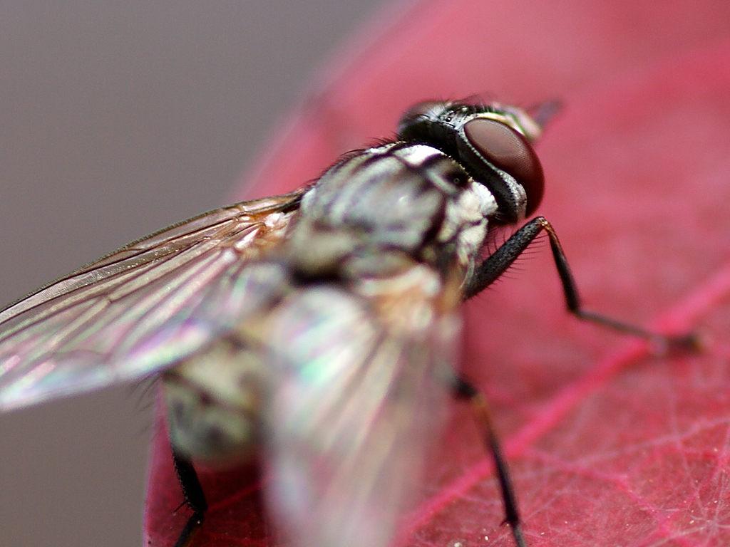 Φάρμα για μύγες κερδίζει βραβείο καινοτομίας του ΟΗΕ!