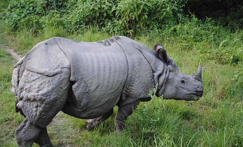 Δολοφονίες για ρινόκερους…