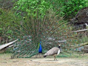 Μεγάλη όρθια πουλί