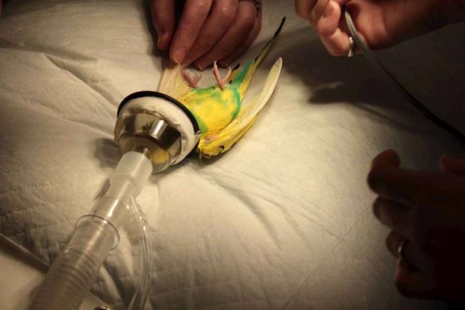 Τα πουλιά στο χειρουργείο!!!