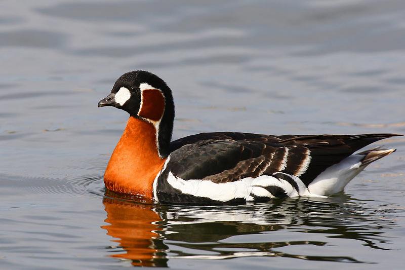 Το Δέλτα του Έβρου και τα σπάνια είδη πουλιών.
