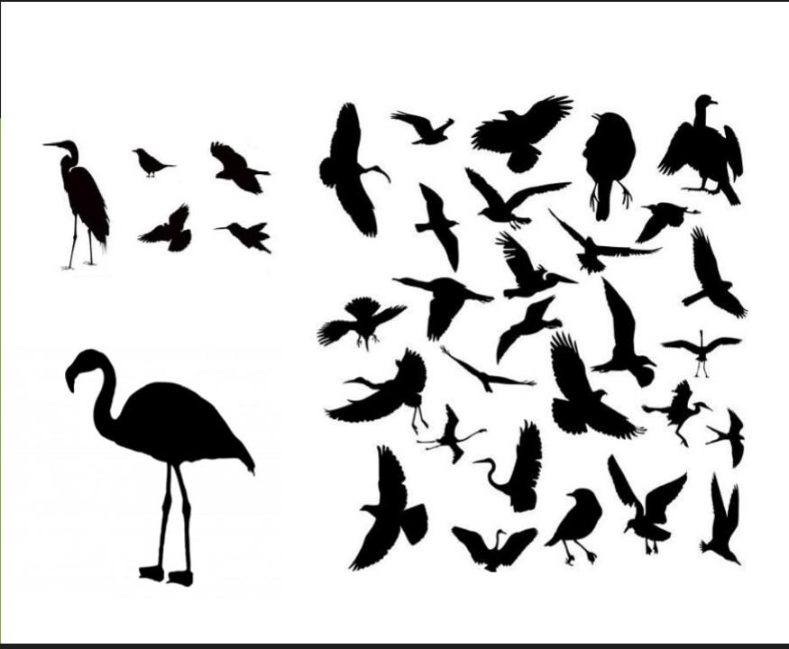 Αναγνώριση – Ταξινόμηση πτηνών.