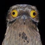 Ένα πολύ αστείο και ταυτόχρονα τρομακτικό πουλί!!