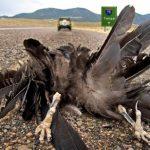 Τα πουλιά που σκοτώνονται στην άσφαλτο «είναι απλά ηλίθια» , ειναι το πόρισμα των ορνιθολογων!!!