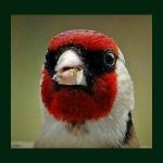 Τα 37 πιο γνωστά πουλιά της Ελλάδος!!
