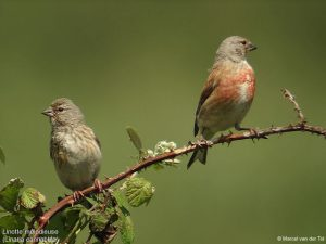 Μεγάλο πουλί vs μικρό
