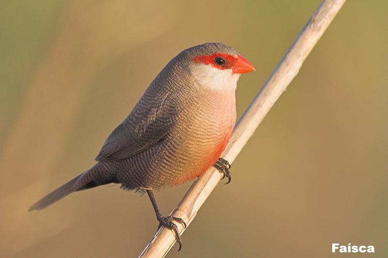 Περίπου 100 σπάνια και εξωτικά πουλιά βρήκαν ασφαλές καταφύγιο…