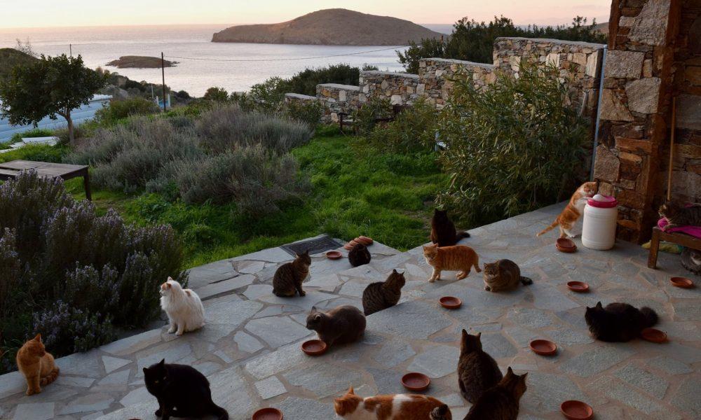Άκου δουλειά!!! 500 ευρώ το μήνα για να ταΐζεις γάτες στη Σύρο…