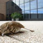 Μεθυσμένα …πουλιά δημιουργούν μικροπροβλήματα!!
