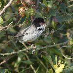 Μοναδικά ενδημικά πουλιά της Κύπρου.