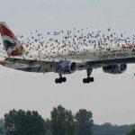 Παραλίγο να πέσει αεροπλάνο από… πουλιά!!! (Φωτό)