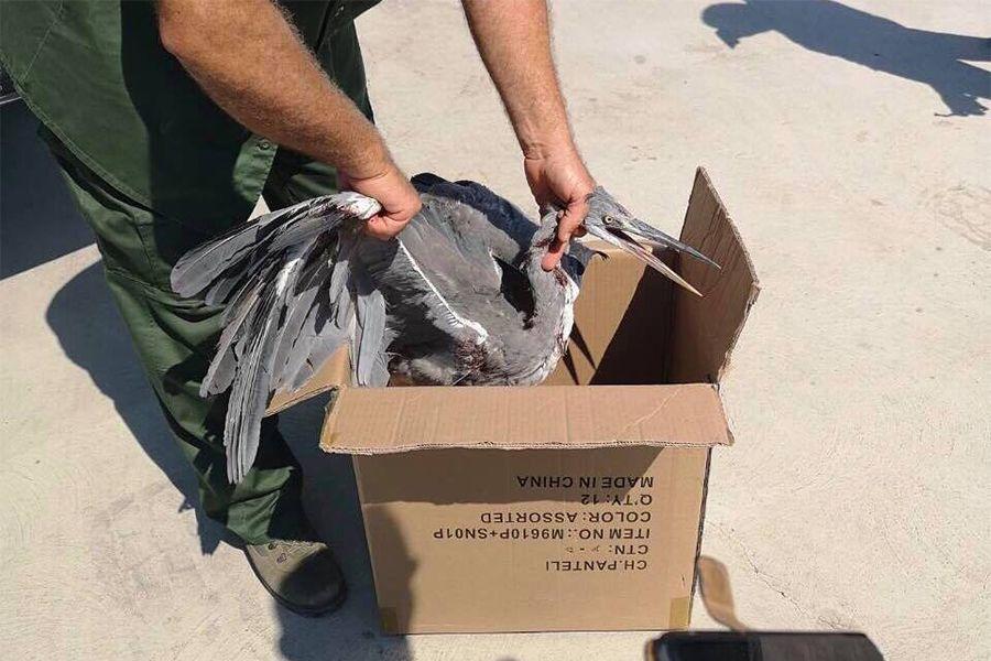 Λαθροθήρας πυροβόλησε εντυπωσιακό πουλί στην Λάρνακα…