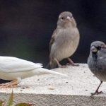 Ένα μοναχικό πουλί…