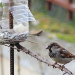 Σέρρες : Φτιάχνουμε ταΐστρες για πουλιά από ανακυκλώσιμα υλικά!!