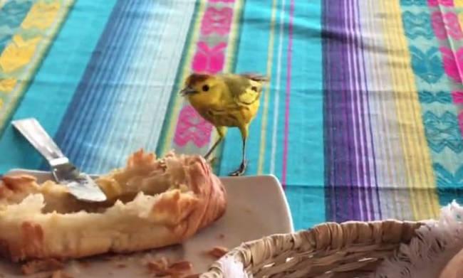 Ο φτερωτός επισκέπτης παίρνει πρωινό!! (Βίντεο)