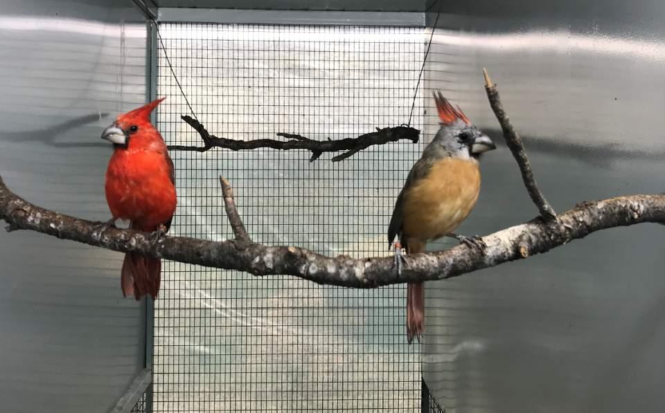 Σπάνια και εξωτικά πτηνά γεννιούνται και μεγαλώνουν στην Παλλήνη.