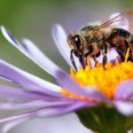 Εξαφανίζονται τα έντομα και κινδυνεύει ο πλανήτης… Τα πουλιά τρώνε πουλιά…