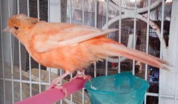 Προσοχή με τα πουλιά κάθε εποχή κρύβει παγίδες…