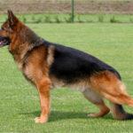 Θετικός στον κορονοϊό και δεύτερος σκύλος στο Χονγκ Κονγκ