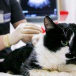 Γάτος βρέθηκε θετικός στον κορονοϊό στη Βρετανία..