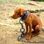 Η κακοποίηση ζώων συνδέεται με την κακοποίηση ανθρώπων…