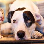 """Ο σκύλος Λέον ανέλαβε την """"ανατροφή"""" για 2 εγκαταλελειμμένα τιγράκια… Δείτε το βίντεο!"""
