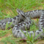 Ενδιαφέρουσες συμβουλές για τα φίδια. Επιτίθενται; Πως πρέπει να χειριστούμε μια συνάντηση.