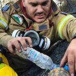 Ο πυροσβέστης και η φωτογραφία με τη χελώνα μέσα στην πυρκαγιά.